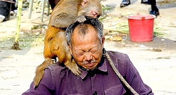 Keep Your Dang Monkey